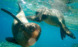 galapagos adventure travel tours