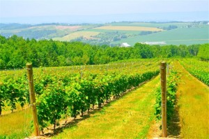 Nova Scotia Vinyards